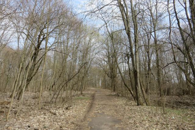 Аллея, видимо, проложенная по следам древней монастырской дороги