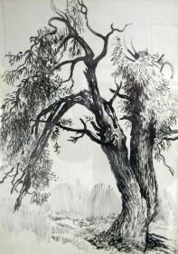 В.Поляков. Старое дерево