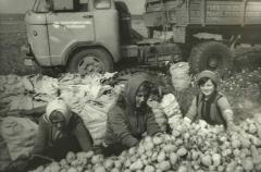 Учащиеся Новозыбковского педучилища на сельхозработах (начало 1980-х)