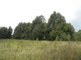 Преобладающий пейзаж