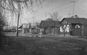Домашняя живность на окраине Новозыбкова. Фото из архива А.Фаранова