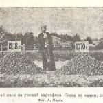 Действие калийной соли на урожай картофеля. Опыт 1925 г.