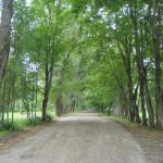 Дорога к главному корпусу