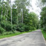 Дорога к опытной станции (3)