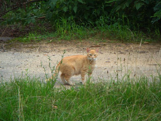 Единственный наблюдатель - рыжий кот