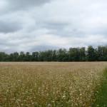 Опытные поля (11)