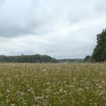 Опытные поля (5)