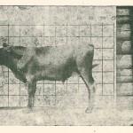 Отдел животноводства (6)